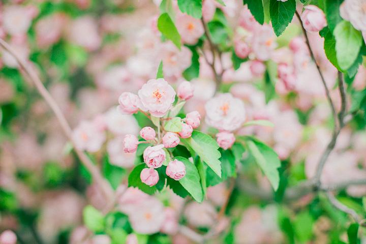 spring-4_26602426406_o.jpg