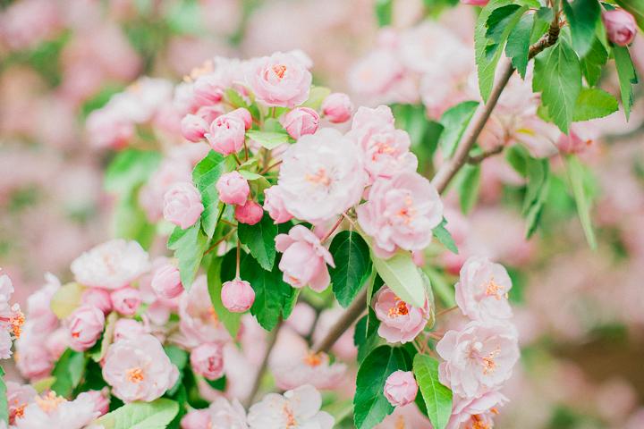 spring-7_26023025924_o.jpg
