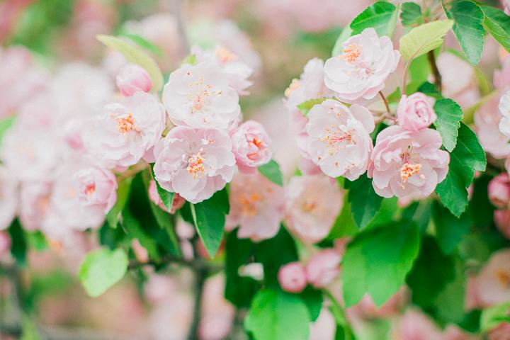 spring-8_26025286843_o.jpg