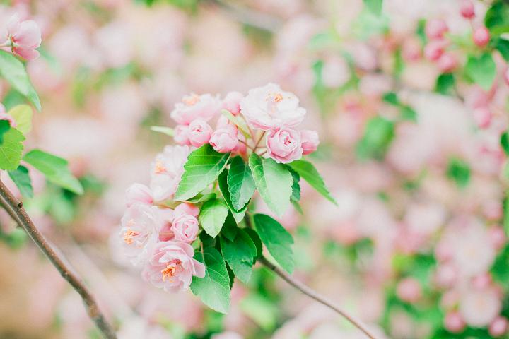 spring-11_26563471221_o.jpg