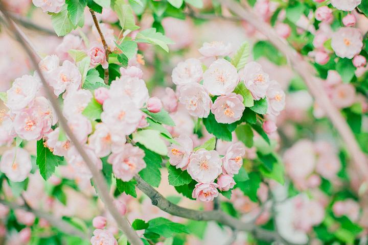 spring-12_26563472621_o.jpg