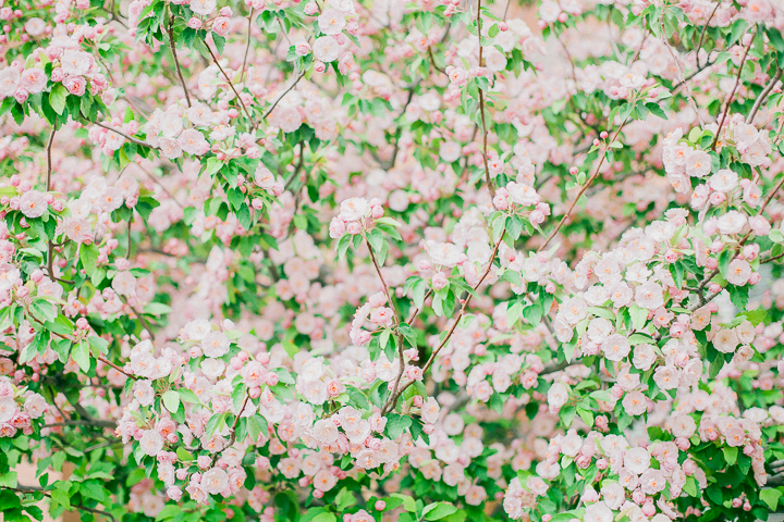 spring-14_26602421336_o.jpg