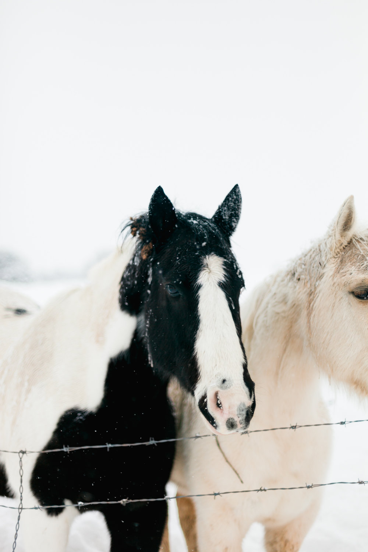 snow-ponies-tone-5_24767977171_o.jpg