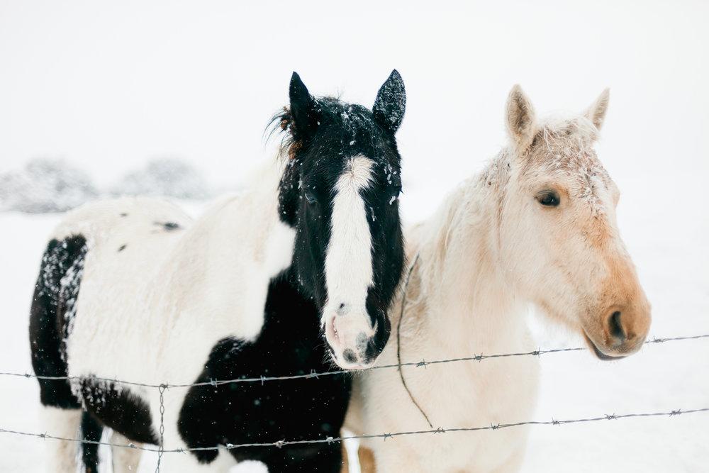 snow-ponies-tone-8_24743552102_o.jpg
