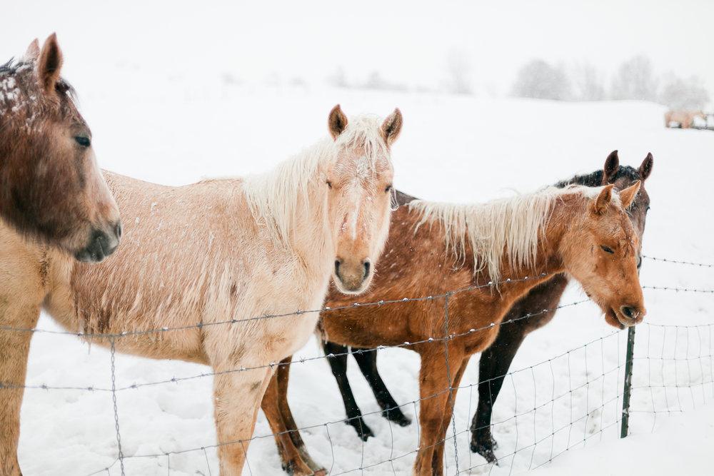 snow-ponies-tone-7_24743548912_o.jpg