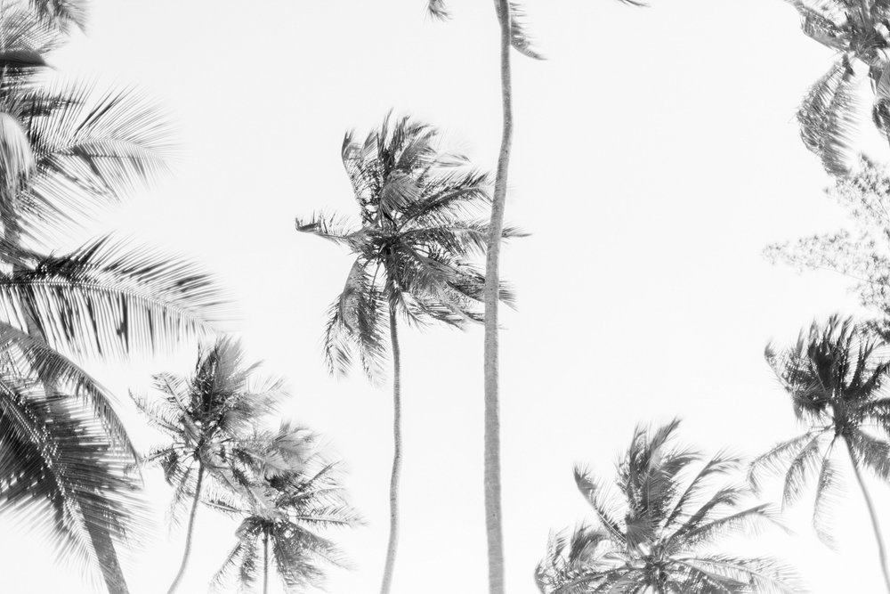 Palms - $15 +