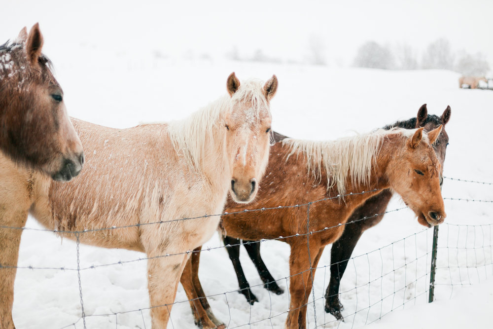 Snow Ponies - $15 +