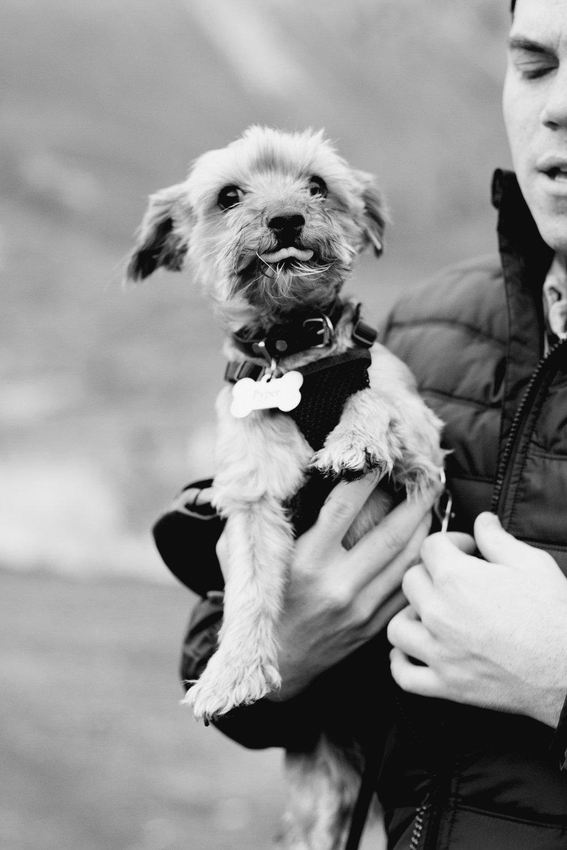 Puppies-BW-8.jpg
