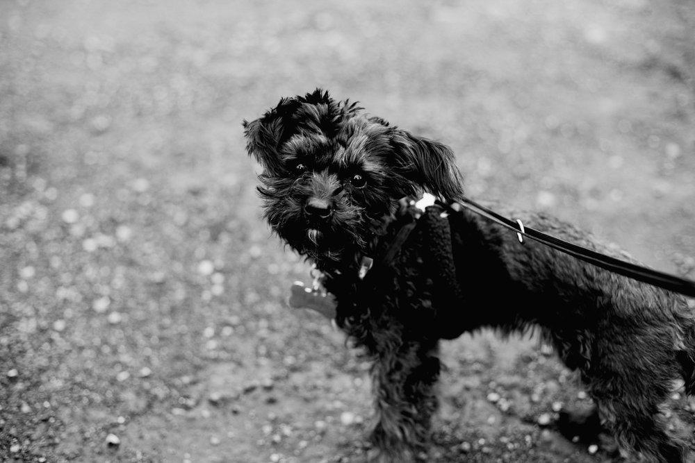 Puppies-BW-17.jpg
