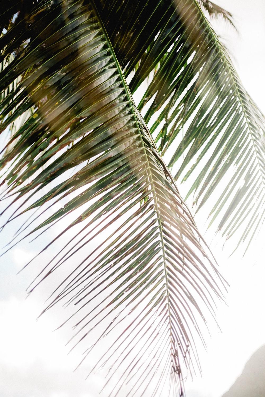 Hawaii-346.jpg