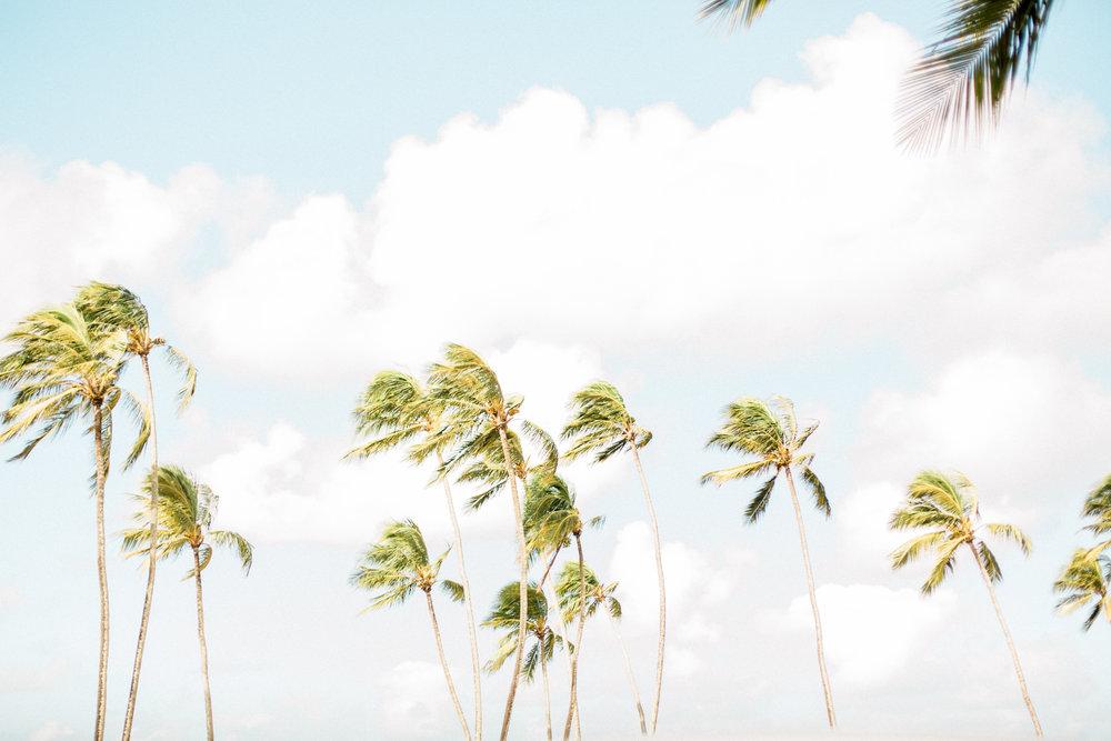 Hawaii-459.jpg