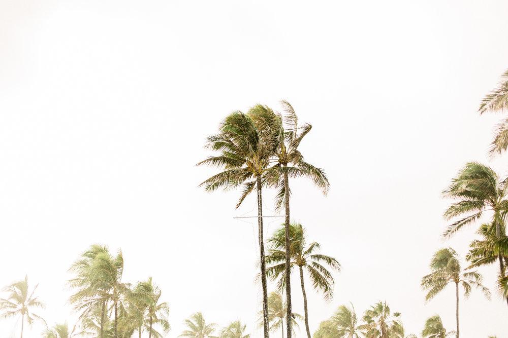 Hawaii-618.jpg