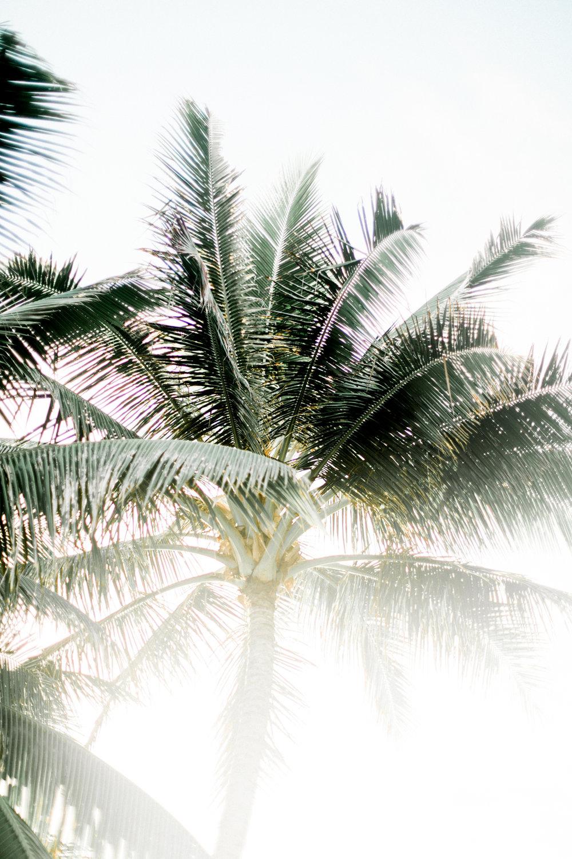 Hawaii-929.jpg