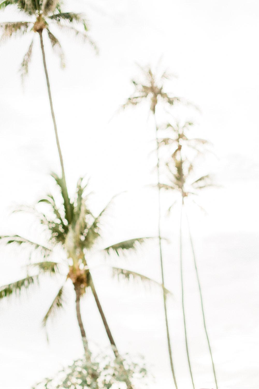 Hawaii-1122.jpg