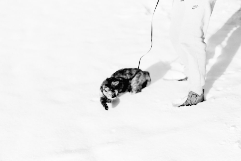 Marnies-First-Snow-BW-5.jpg