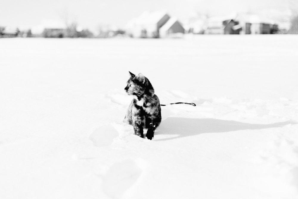 Marnies-First-Snow-BW-14.jpg