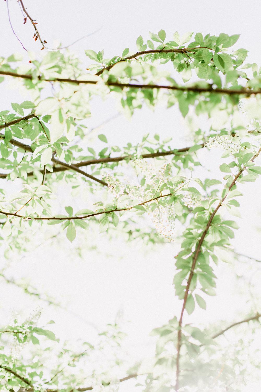 Bloom-21.jpg