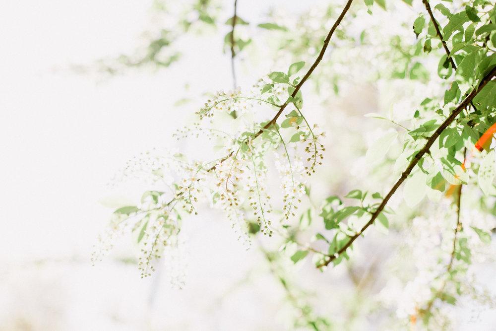 Bloom-26.jpg