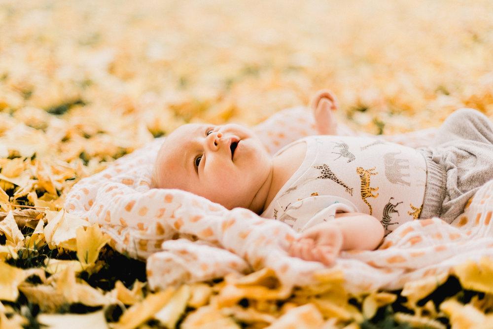 Yellow-Leaves-53.jpg