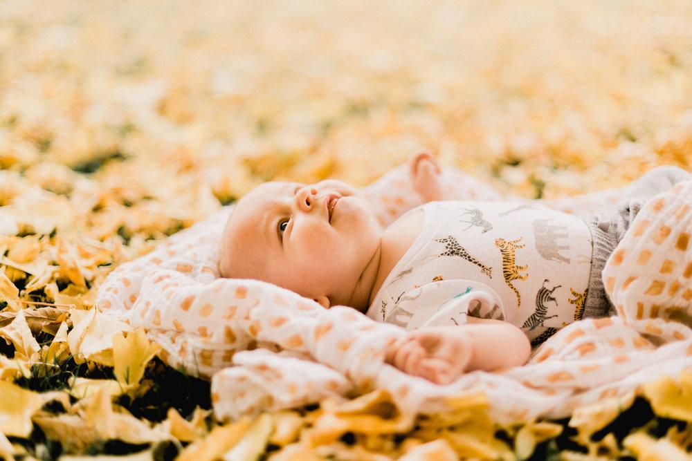 Yellow-Leaves-54.jpg