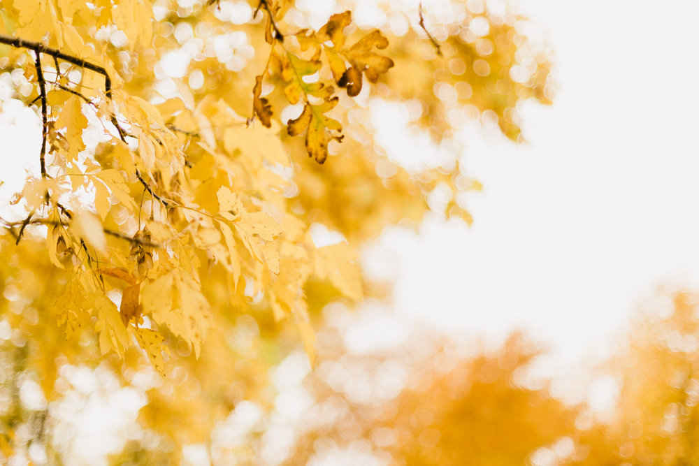Yellow-Leaves-15.jpg