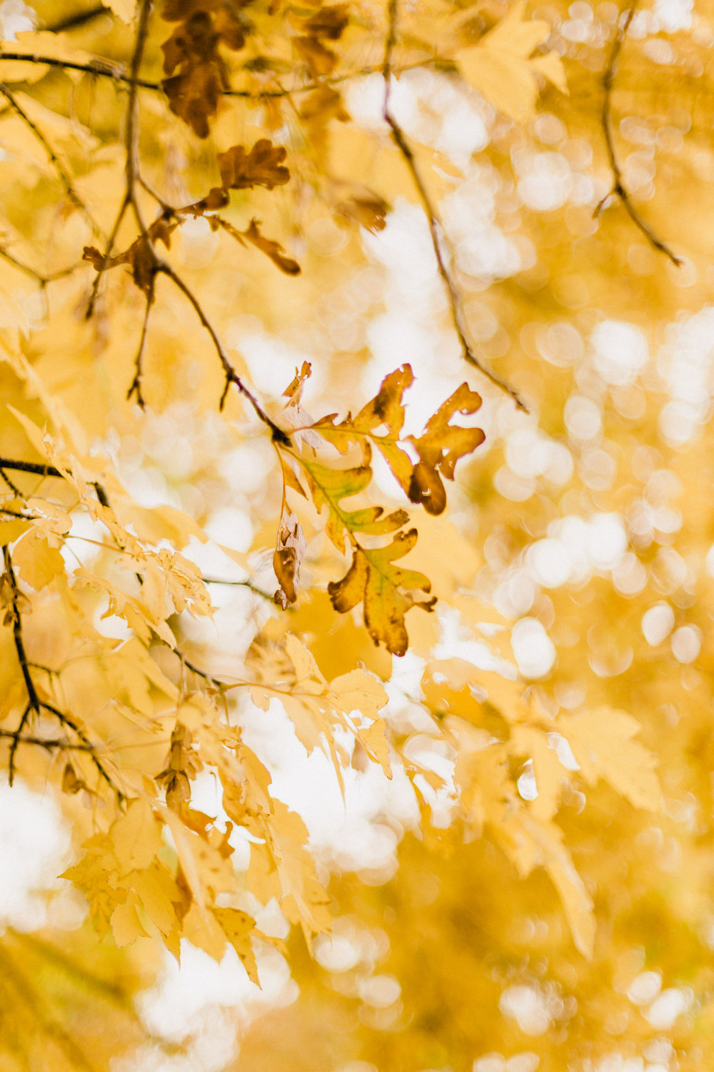 Yellow-Leaves-11.jpg