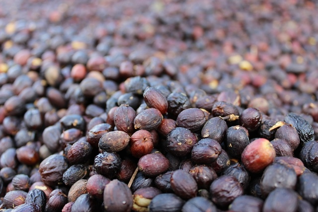 Natural Process Coffee Cherries.jpg