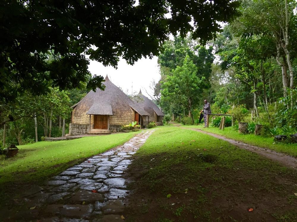 Jungle hotel.jpg