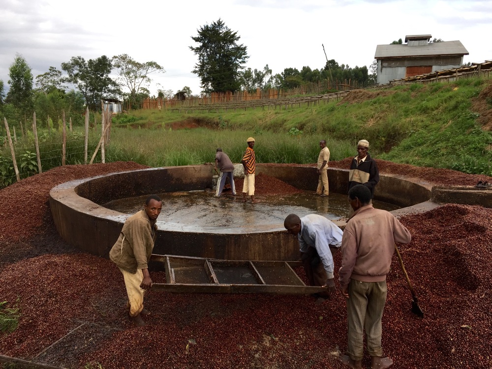 Ethiopian Safari - Washing Process