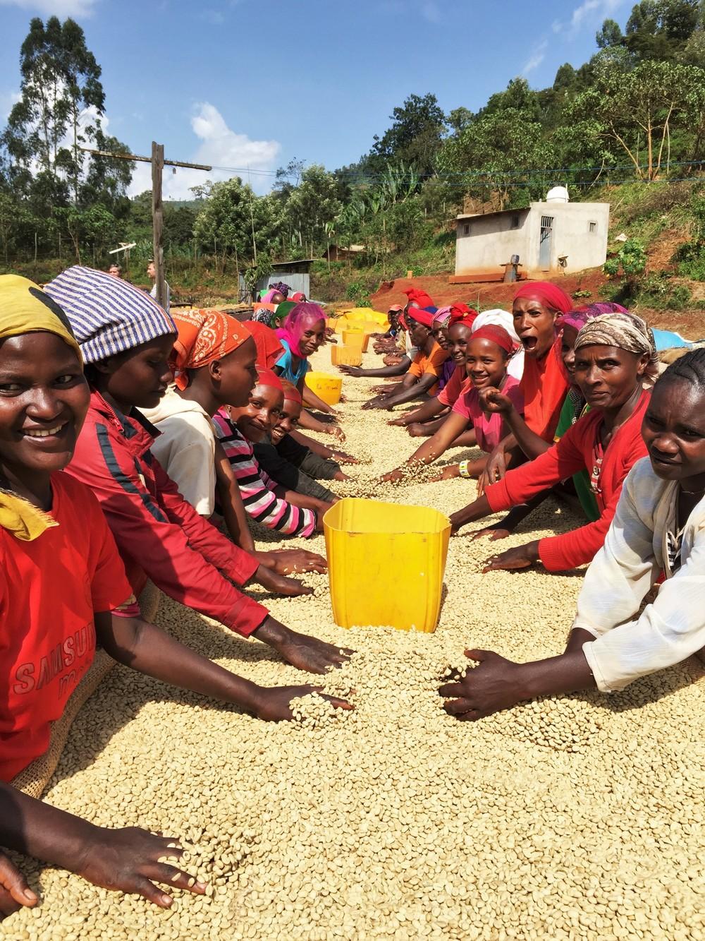 Ethiopian Safari - Beans