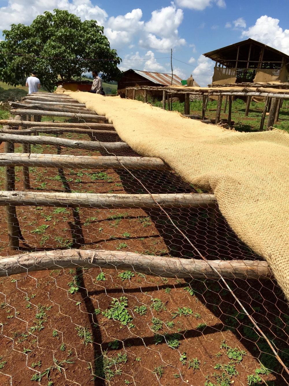 Drying racks in Limu.jpg
