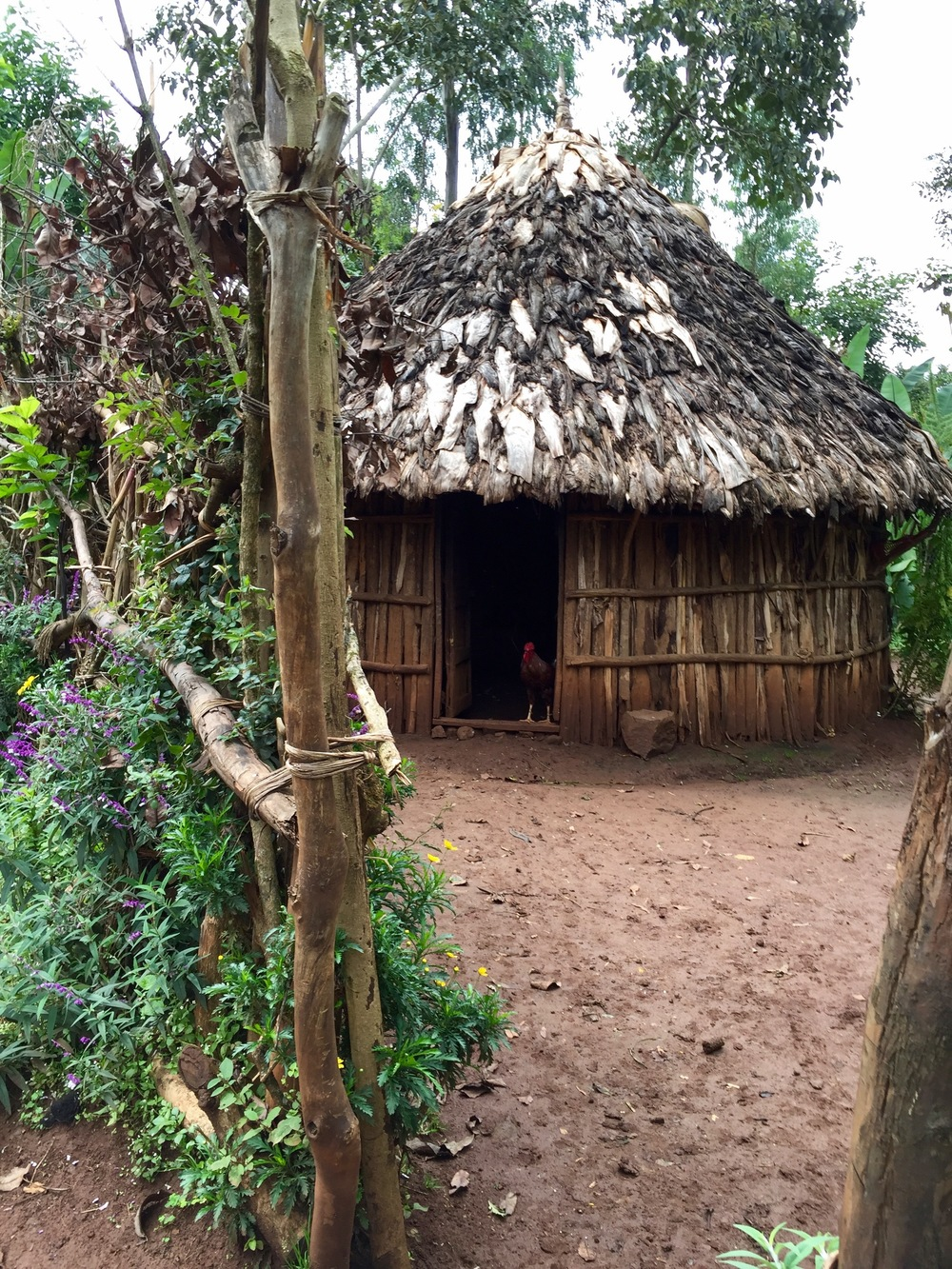 Ethiopian Safari - Plantation Huts