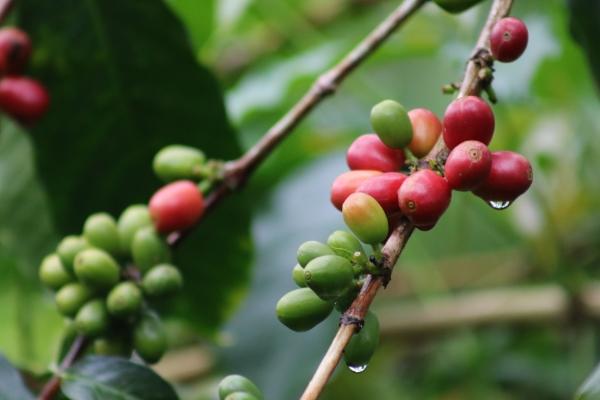 Estate Berries