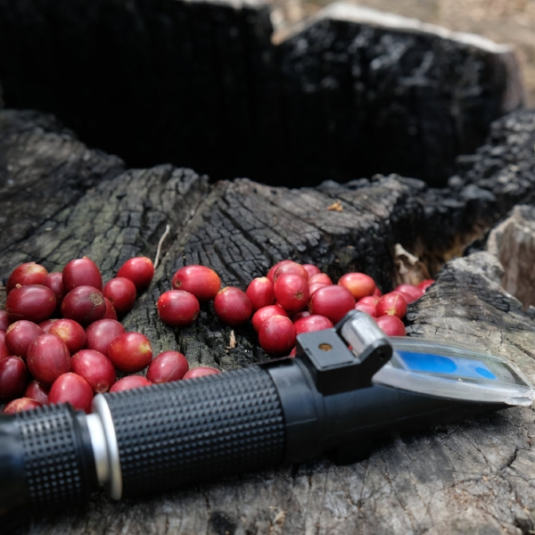 Project Raggiana Microlot Berries