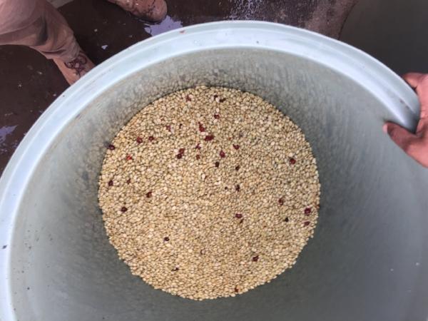 The fermentation begins.