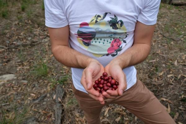 The perfect cherries.
