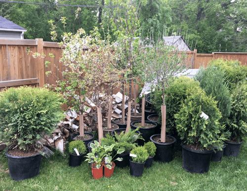 treeplanting.png