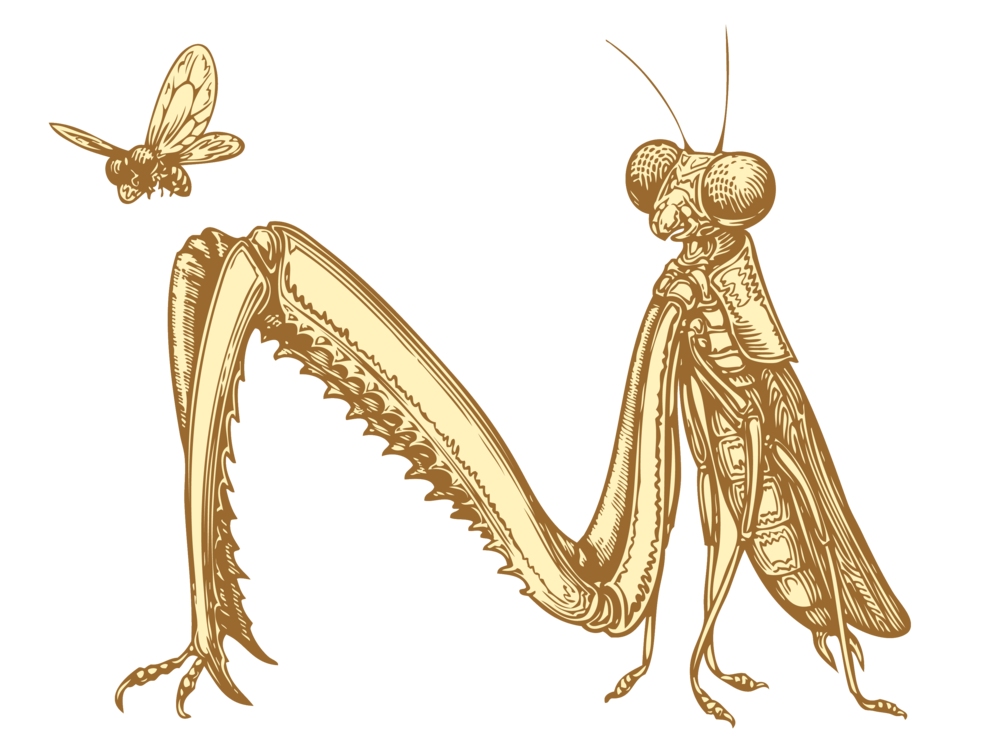 PrayingMantis-transparent-background.png