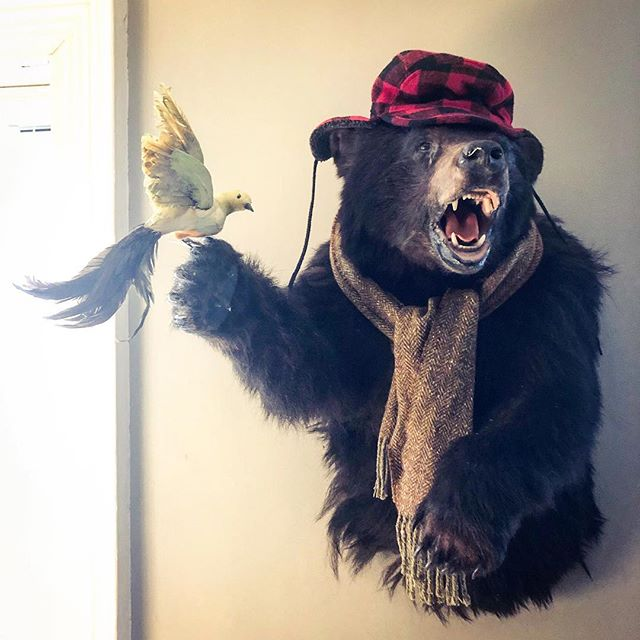 Barry Barron. He's our bear. (The bird is fake)