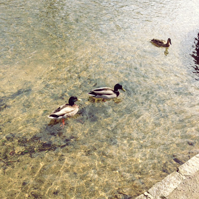 Look how clear the water is. And the duckies are so cute.