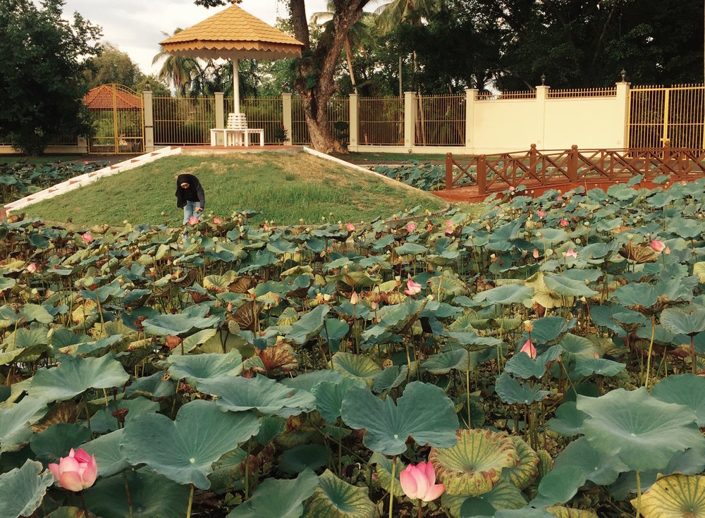 lotuses.jpg