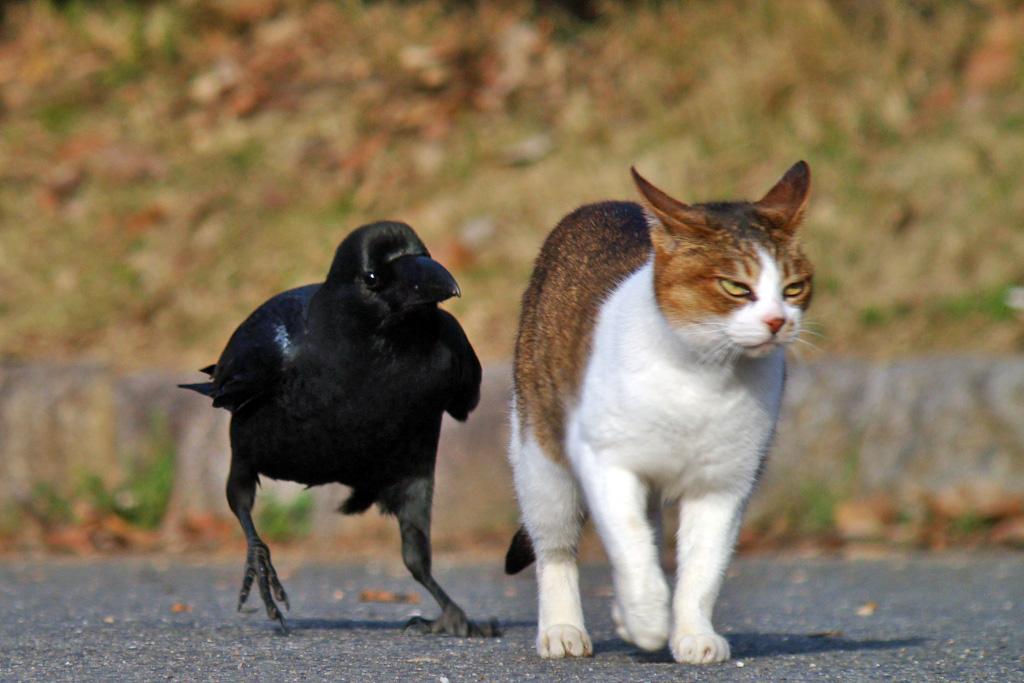 (via  juliasegal ,  zenigata )   Crow: So, how's life?   Cat: …