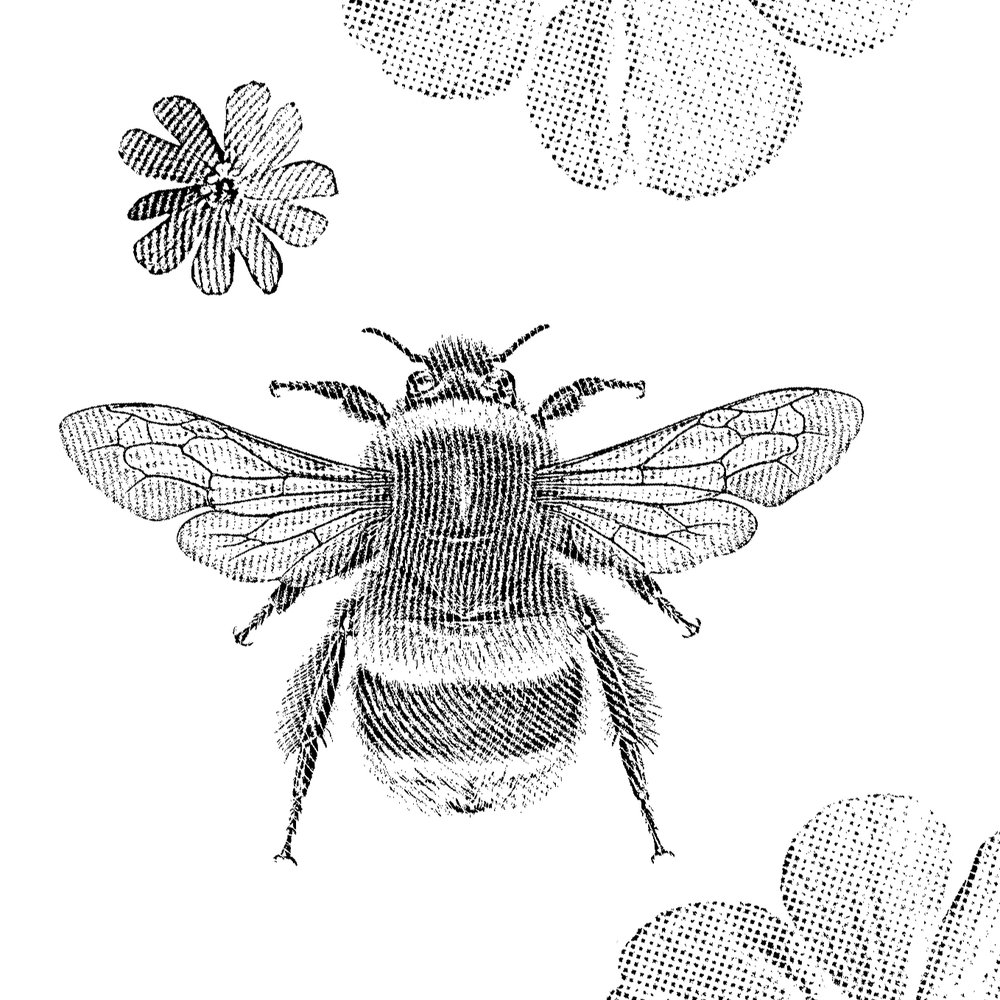 Bumble Bee Ia.jpg