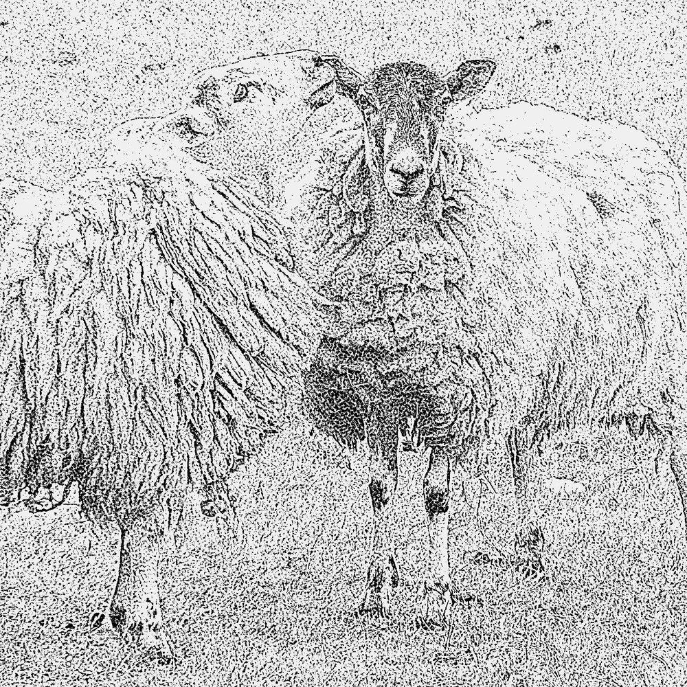 """Kissing Sheep"" design prototype"