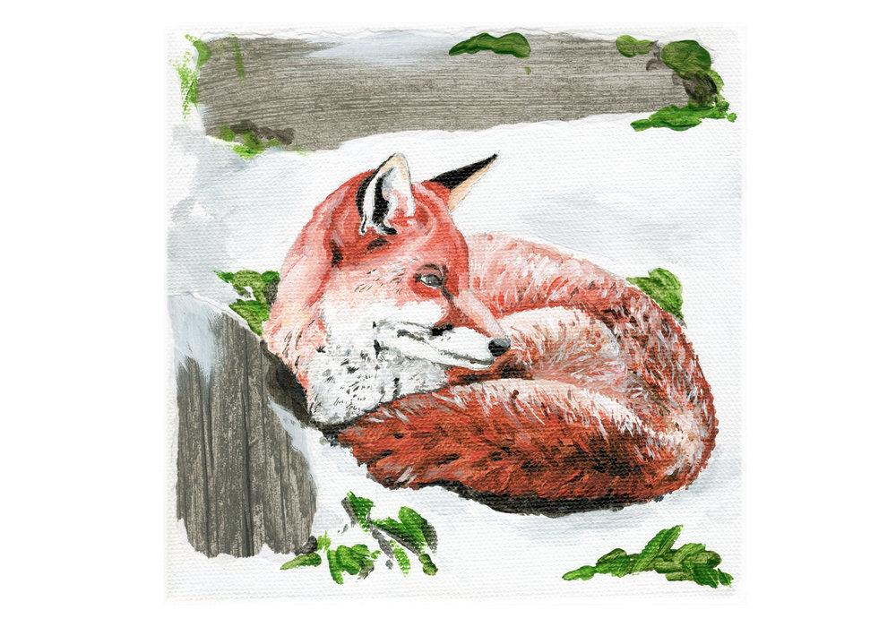 Fox-web.jpg