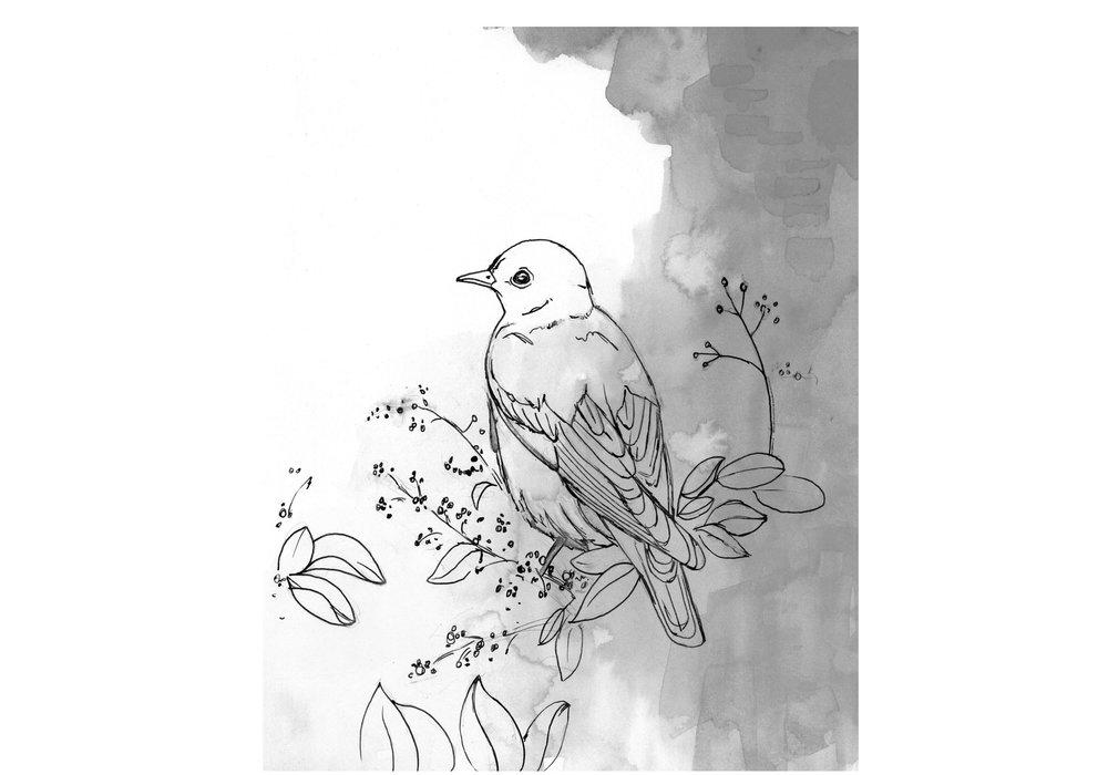 BW-Bluebird-web.jpg