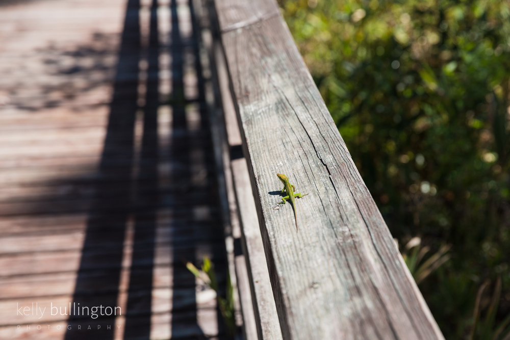 Kelly Bullington Photography -7884.jpg