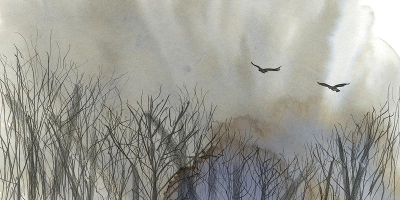 house_katherine_crows.72.jpg