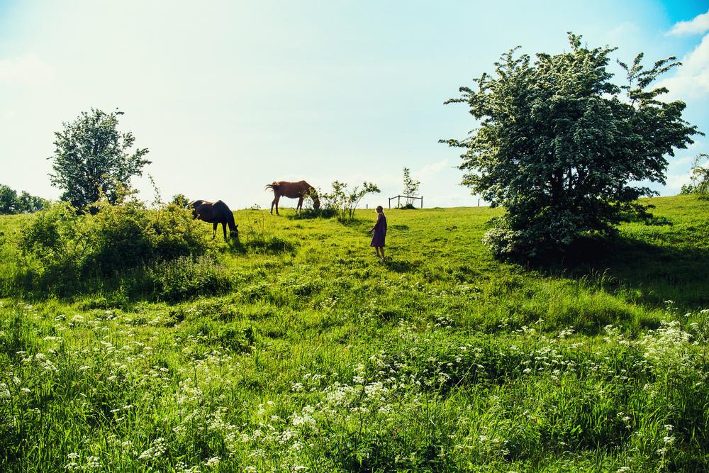 Österlen i Skåne på sommaren3