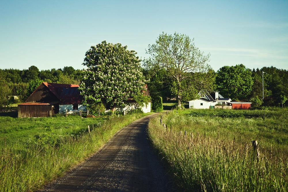 Österlen i Skåne på sommaren. Roadtrip bland Skånes böljande kullar.  Fotograf Christian Gustavsson